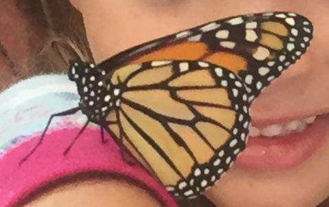Monarch new born