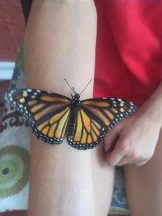 New Monarch